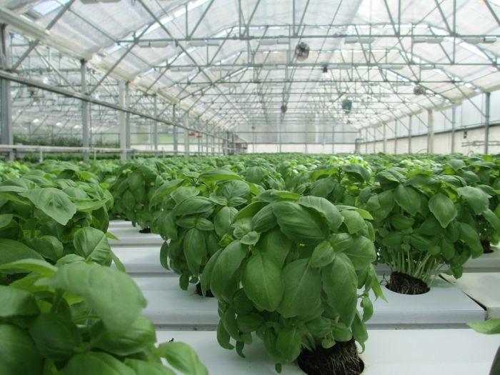 Qatar's first solar agriculture greenhouse